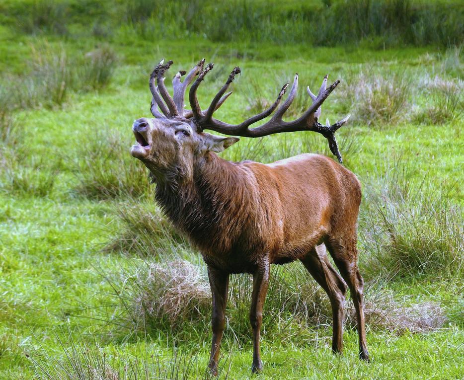 """A to jste věděli, že """"zde"""" se maďarsky řekne """"jelen""""?"""