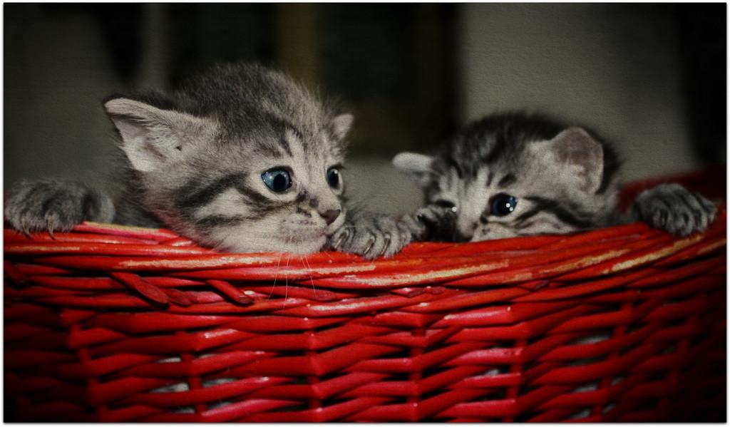 """Když se řekne """"trpný rod"""", každý copywriter si představí umírající koťátko. A víte co? Je mi to fuk! Hele: Tento článek je už DOPSÁN. Je i PUBLIKOVÁN. A je v něm POUŽITO fakt hafo pasiv."""
